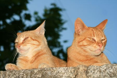 married cats Stock Photo - 1354273