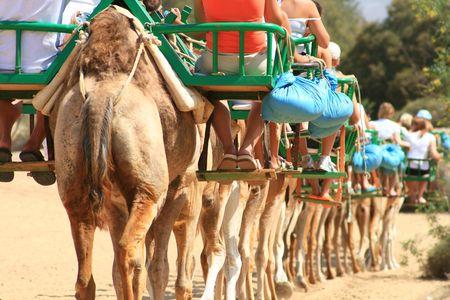 tourist camels caravan