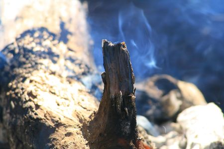 burnt log detail