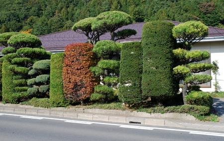 Japanese garden, Kawaguchi