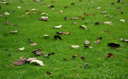Lawn with autumn fallen leaves Фото со стока