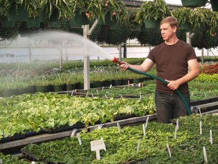Man waters plants inside of a commercial green house.