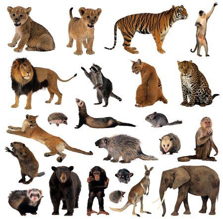 Animals Stock Photo - 6871671