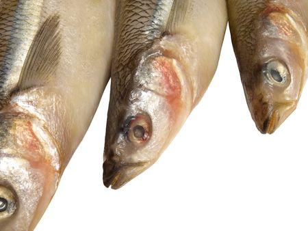 fish         Stock Photo - 6871614