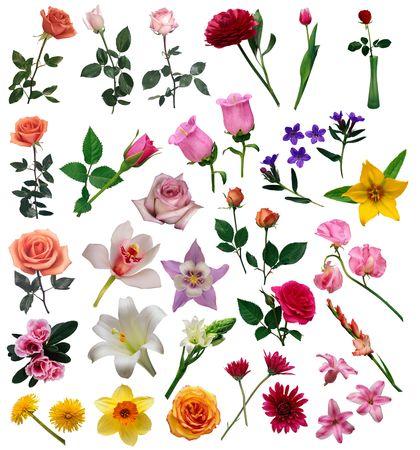 flowers Stock Photo - 7154301