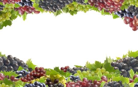 grapevine: Grape