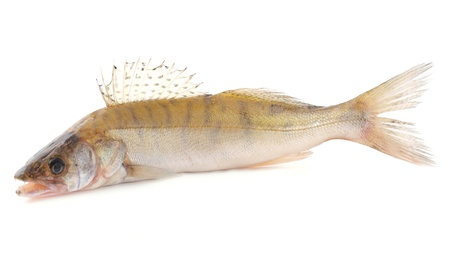 Fish perch      Stock Photo - 15397309