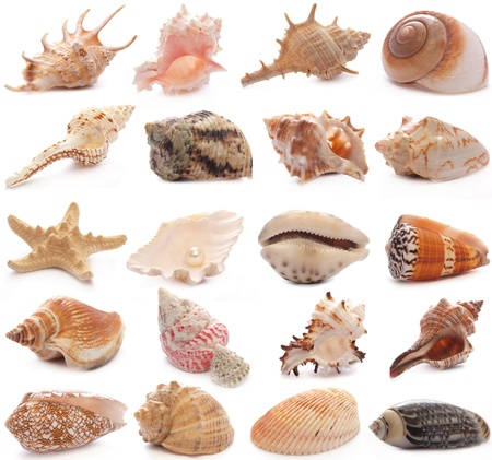 Shell collection photo