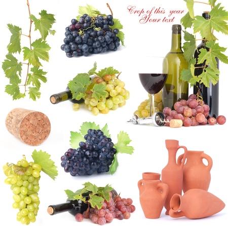 berryes: Wine grape