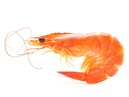 Shrimps isolated         photo