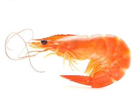 Shrimps isolated