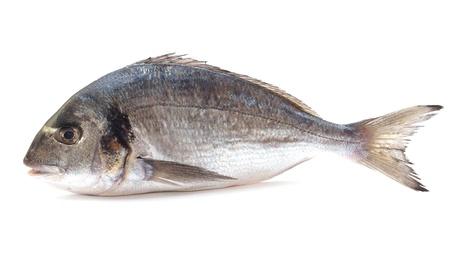 dorado: Fish dorado          Stock Photo