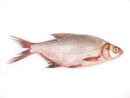 daurade: br�me de poisson