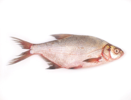 Fish bream        photo