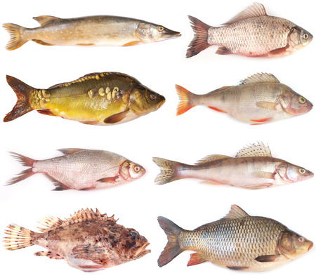 Fish collection photo