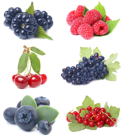 Berries collection photo