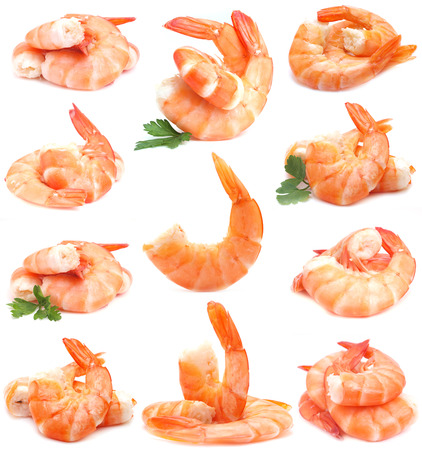Fresh shrimps photo