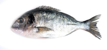 dorado: Fish dorado