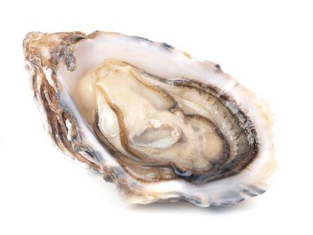 Frische Auster