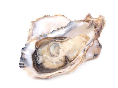 Huîtres fraîches Banque d'images - 24505046