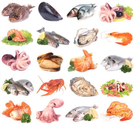 dorado fish: Fresh seafood