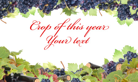 berryes: Wine grapes with copy space Stock Photo