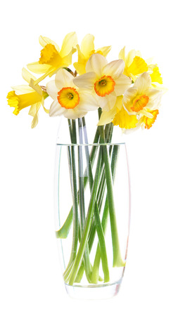 Flower narcissus Stock Photo - 27193595