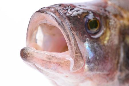 Fish perch Stock Photo
