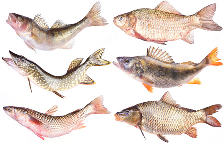 Fish collection Stock Photo - 27740415
