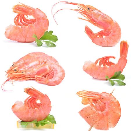 Fresh shrimps photo