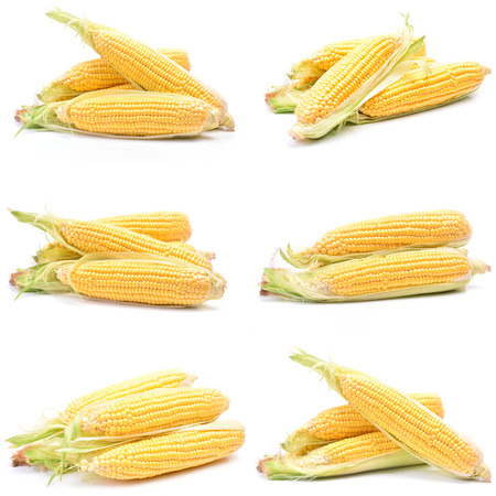 Fresh corns photo