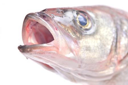 bass fish: Fish seabass
