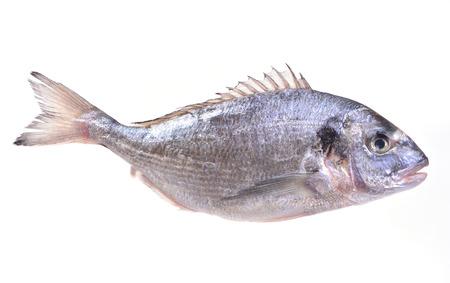 fish tail: dorado fish