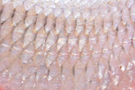 chub: Fish chub texture