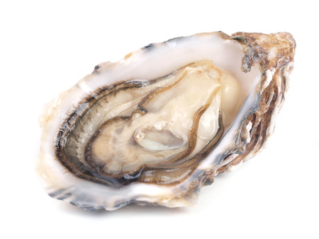 oyster shell: Fresh oyster