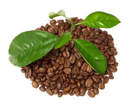 caffee photo
