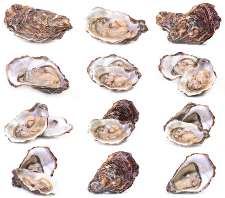 Fresh oyster collection