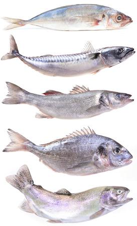 salmo trutta: sea fish Stock Photo