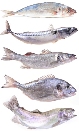 salmonidae: sea fish Stock Photo