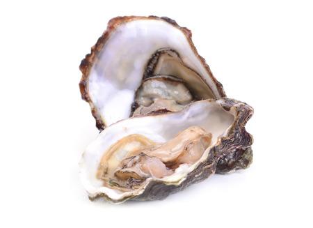 Verse oester Stockfoto