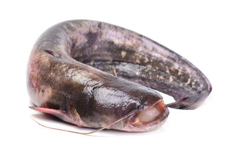 bagre: catfish