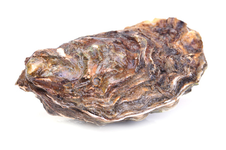 oyster: Fresh oyster