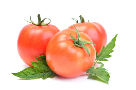 fresh leaf: fresh tomato Stock Photo