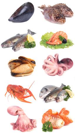 mariscos: pescados y mariscos frescos Foto de archivo