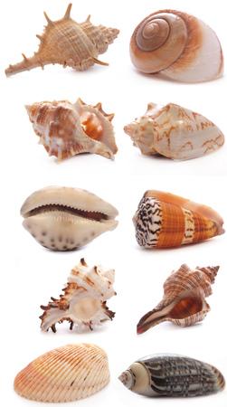 seashell: shell