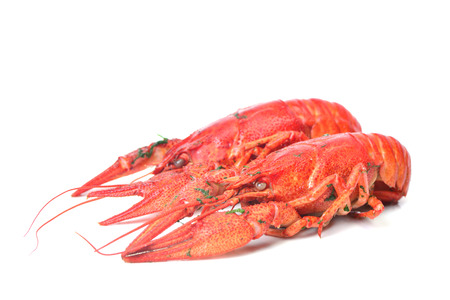 boiled: boiled crayfish