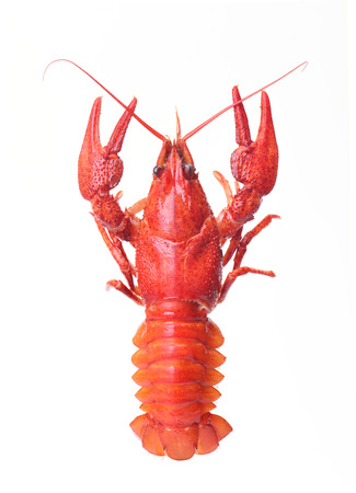 cancers: boiled crayfish