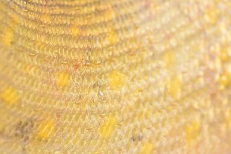 pickerel: Texture fish pike
