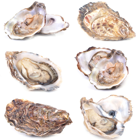 jhy: Fresh oyster