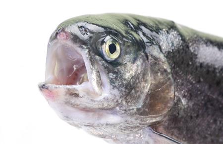 truchas: Trucha pescado